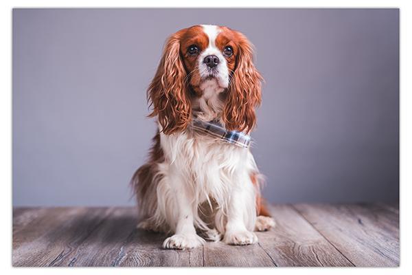 Fotografiranje psov