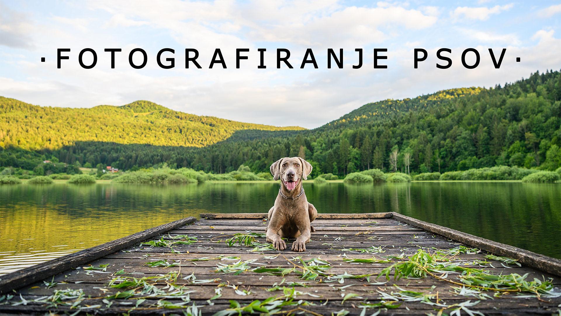 Fotografiranje psov - naslovna fotografija